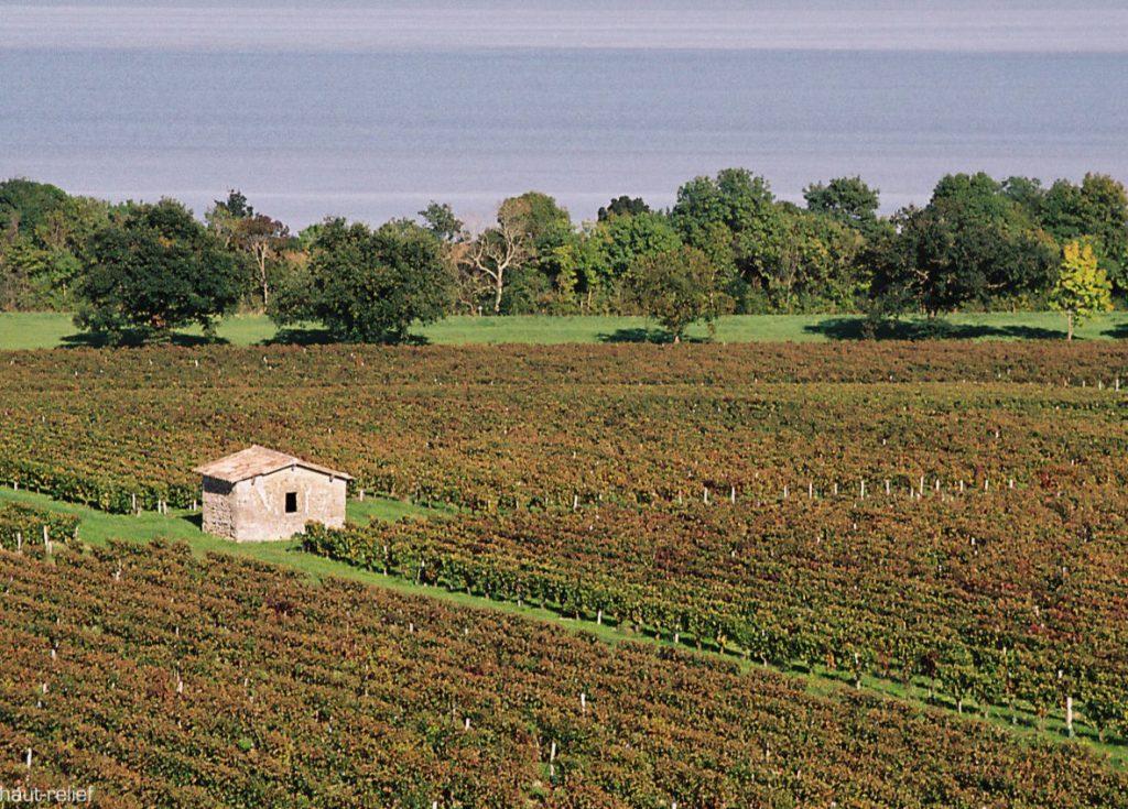 vue-estuaire-maison-dans-les-vignes-du-medoc